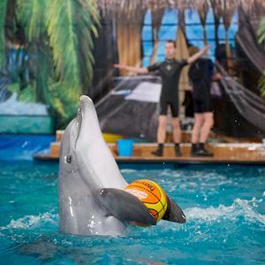 Дельфинарии, океанариумы Ногинска