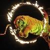 Цирки в Ногинске
